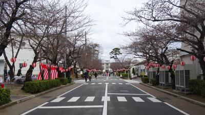 陸上自衛隊 伊丹駐屯地「桜フェスタ2017」(1) 入場から部外園芸と模擬売店風景。