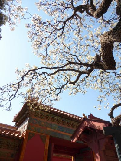 春の北京をお散歩◇天安門広場、故宮博物院から景山公園、南鑼鼓港へ
