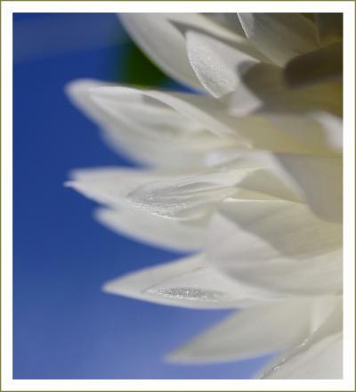 Solitary Journey[1813]標高500mの世羅高原農場に感動の花風景がありました♪<西日本最大級の秋のダリア祭>広島県世羅町