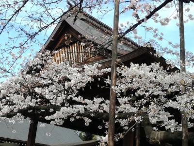 桜を求めて東京散歩