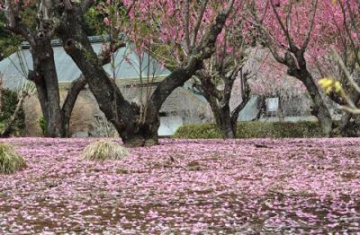 桃の花の里