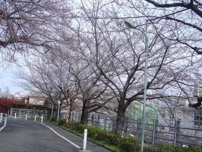 田園調布でお花見(下見編)