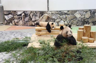 パンダに会いに白浜へ その1