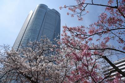 東京桜散策 千鳥ヶ淵から毛利庭園へ