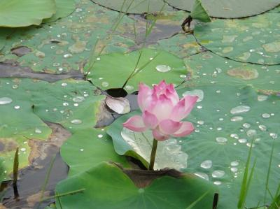 2015夏の旅行はバンコク&ホーチミン-<7> ホーチミン7区でのんびり