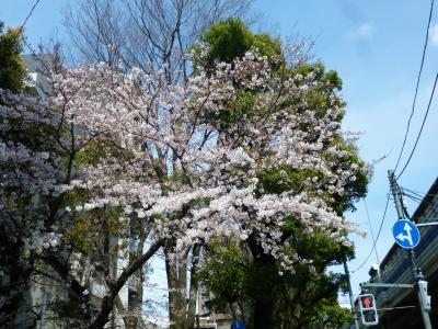 東京散歩♪ vol.39 卯月つれづれ~♪