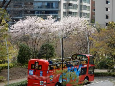 桜散歩2017~六本木~