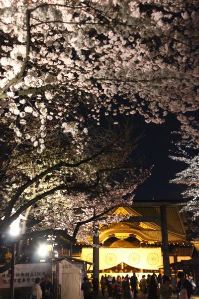 今年も見頃に迎えた夜桜能の夕べ(前編)恒例の靖国神社の夜桜能はおぼろ月夜の満開真っ盛り@