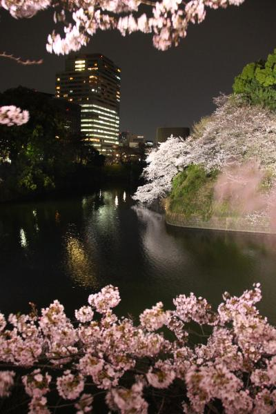 今年も見頃に迎えた夜桜能の夕べ(後編)まだ明るい日没後の北の丸公園からライトアップの千鳥ヶ淵の荘厳な景色