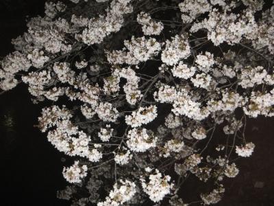 2017年の桜観賞・・・・・③善福寺川緑地公園夜桜2