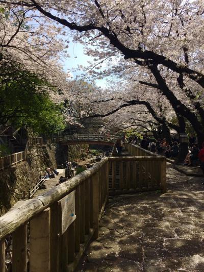 【東京】2017お花見にでかけました、王子・音無親水公園~飛鳥山公園