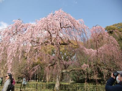桜の京都のはずだったのにぃ~ 2017バージョン 3日目