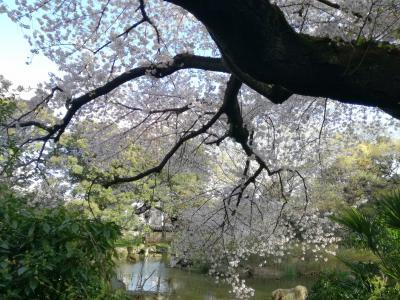 桜を求めて 王子散歩