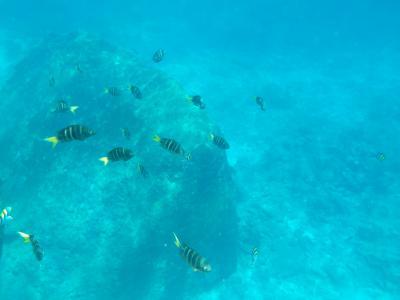 中学生と行くプーケット・バンコク旅行(3)シミラン諸島 その2