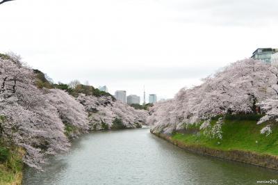 ようやく満開となった東京の桜! でも、天気が・・?: 千鳥ヶ淵と隅田公園のお花見