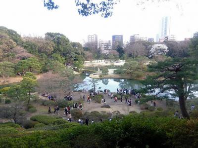 六義園: 暗くなるまで庭園を二巡し,最後にライトアップ枝垂れ桜を見た