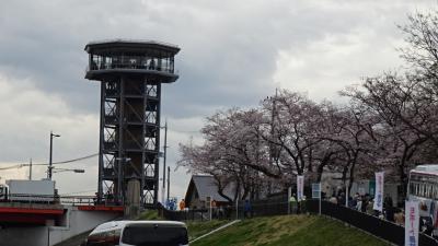花見バスツアーに参加(10) 八幡市駅から徒歩で背割堤へ行き観桜 下巻。