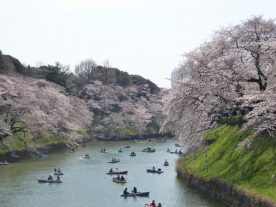 国際的なお花見「千鳥ヶ淵」Vol.1 Youたちに囲まれて賑やかに桜を愛でる♪