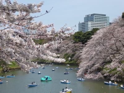 国際的なお花見「千鳥ヶ淵」Vol.2 春の陽気の中 桜を優雅に愛でる♪