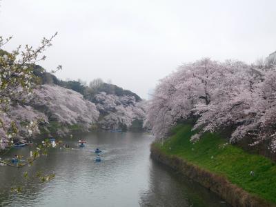 東京2017桜 【3】皇居1
