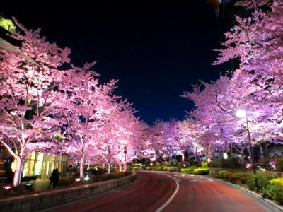 一番の見頃~都心の春の楽しみ方~青空の桜・夜桜・桜スイーツ・芝桜テラス
