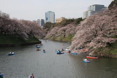 桜の花が散る前に  猛ダッシュの都内桜めぐり 2017年