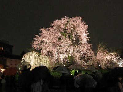 京都の桜 2017 ~御所のち円山 ときどき酒~