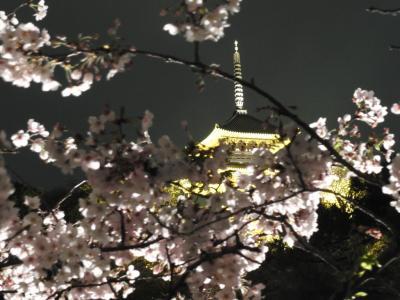 花見2017