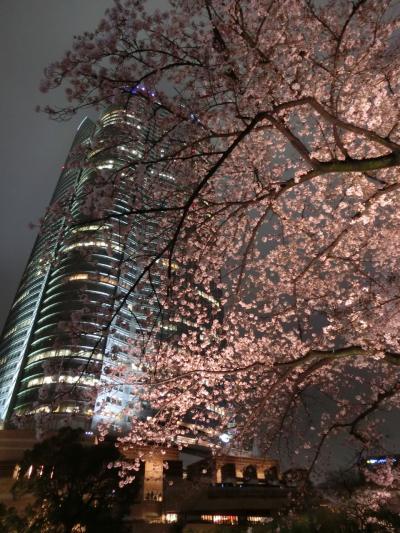 目的は桜よりお酒?六本木エリアでお花見(2017年4月)