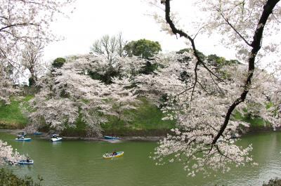 桜満開なれど、天気悪し。千鳥ケ淵 最後の花見Week