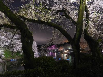 東京2017桜 【6】皇居2