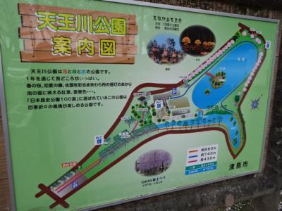 津島天王川公園の桜まつり