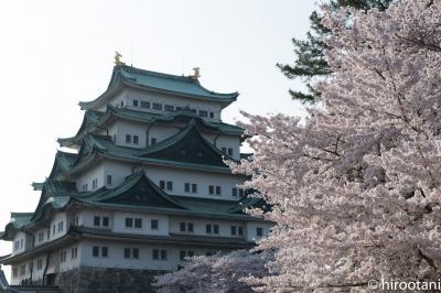 2017 東海の桜【5】名古屋城