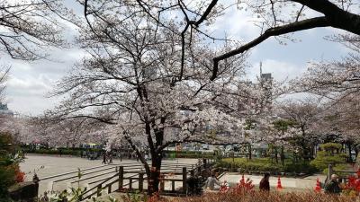 飛鳥山公園の御花見と本当にあった平塚亭、茶店はセットだけどみたらし団子食べました。古川庭園もすぐ近くです。