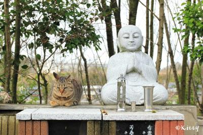 春の福井&奈良☆かわいい動物巡りの旅(1)<御誕生寺の猫たち>