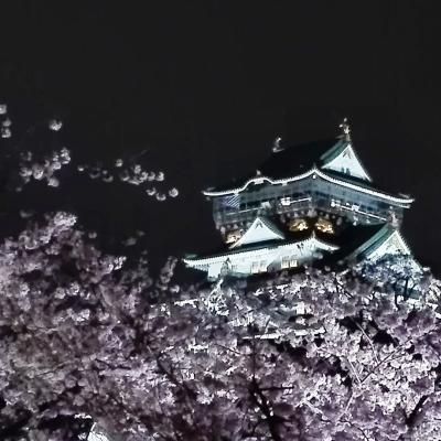 大坂城 西の丸庭園 観桜ナイター