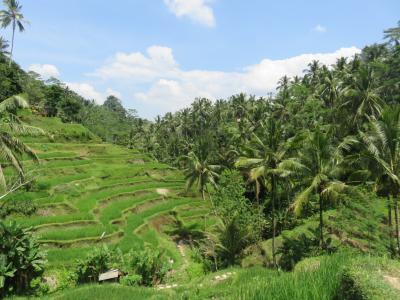 楽しかったインドネシアの旅 3 バリ島編