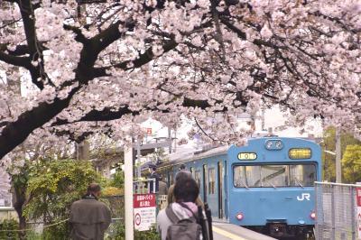 神戸の地に残る国鉄型車両103系を追いかけて、満開な桜が咲き広がる和田岬に訪れてみた