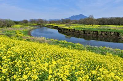 筑波山と菜の花の里ー小貝川散歩