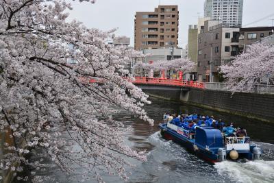 「 散りはじめた桜 目黒川をくだる 」 2017