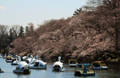 井の頭公園でお花見&吉祥寺散策