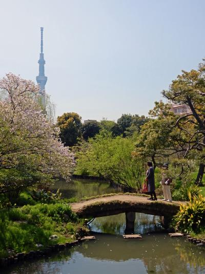 桜舞い散る向島百花園