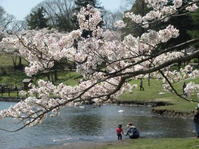 桜と光に包まれた志高湖(大分県別府)
