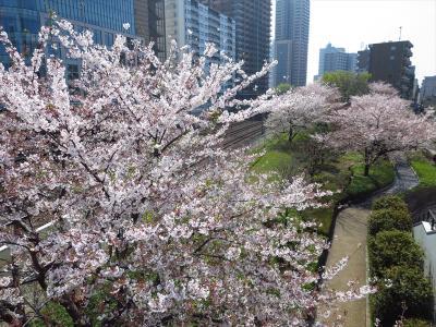 一時帰国★埼玉★リリアパーク(川口西公園)でちょこっとお花見