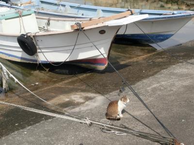 猫の島?真鍋島にいってきた