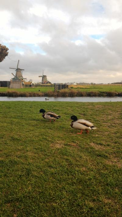 2017 4月 オランダの旅②コテコテのオランダ編