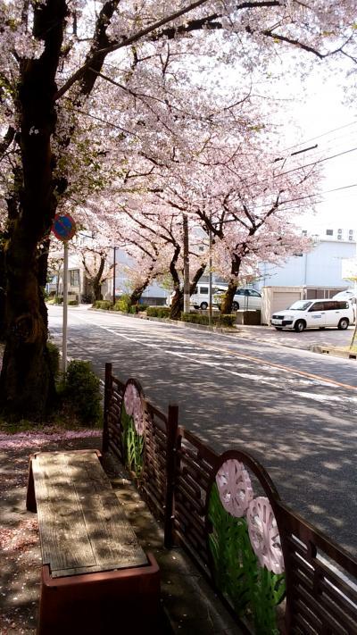 2017春☆藤が丘☆桜並木の街歩きとカフェとパンとケーキ