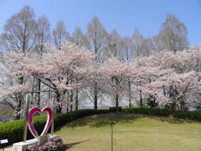 春爛漫 草津市立水生植物公園 みずの森