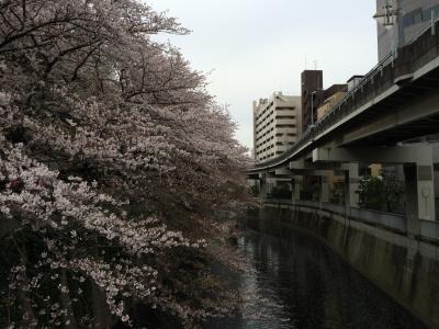 江戸川橋、上野、飯田橋と近場を散策、散り始めた桜を見ながら