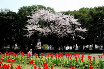 別府公園の桜2017